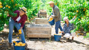 Recruitment for Farm Workers in Canada