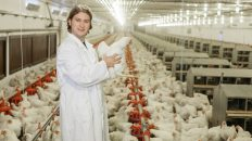 Recruitment For Poultry Farm Worker In Canada